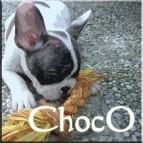 Choco11