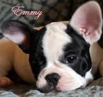 Emmy__