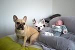 Laya&Inaya